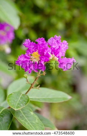 Blurred of Lagerstroemia flower