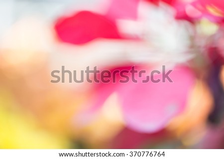 blurred of red and pink flower with colorful bokeh - stock photo