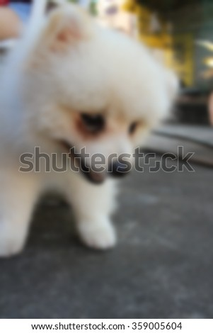Blurred of white pomeranian dog siting at the park. - stock photo