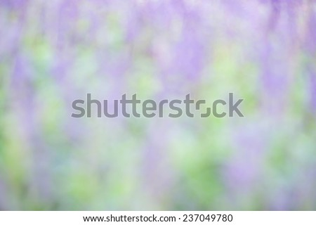 Blurred or defocused lavenders flowers for nature background - stock photo