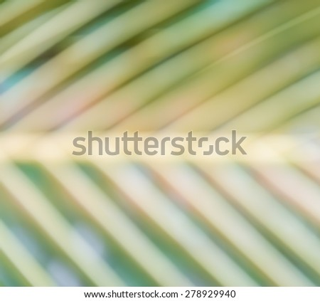 Blurred palm tree leaves
