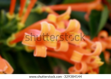 blurred photo flower for background