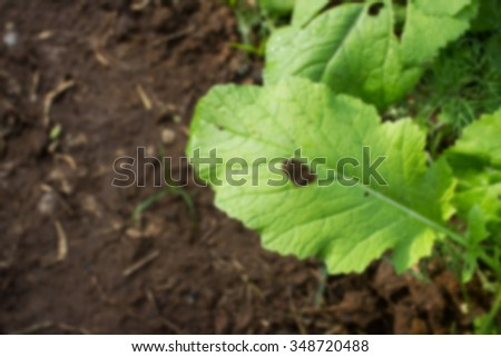 Blurred photo of destroying of insects and warms on vegetable leaf - stock photo