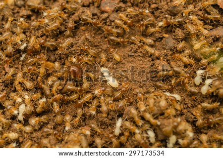 Blurred photo of termite group with a focus at the white one in the center - stock photo