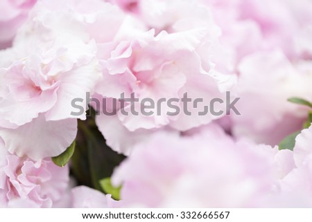 blurred pink flower pattern for backgrounds