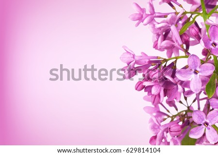 Blurred purple lilac background with copy space