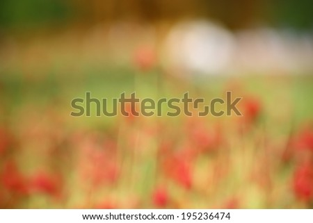 blurred red flower background shallow of depth of focus - stock photo