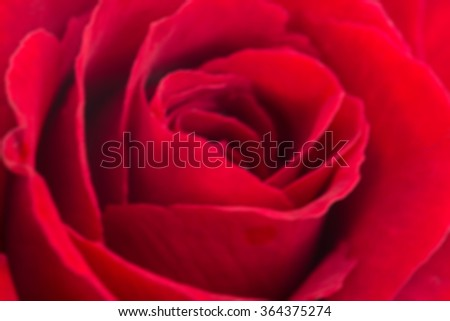 Blurred red rose petal flower - stock photo