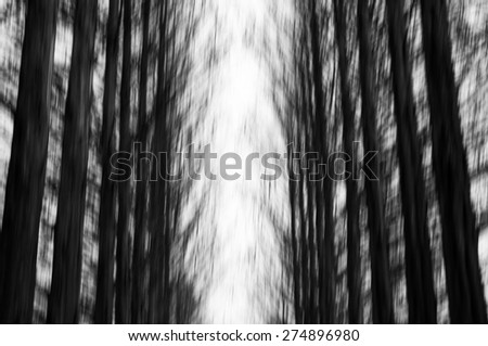 Blurred spooky pine woods in black and white 