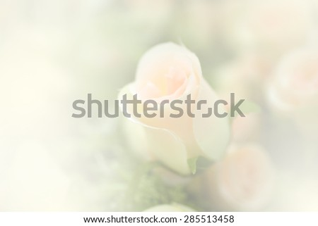blurred sweet artificial rose useful for background - stock photo