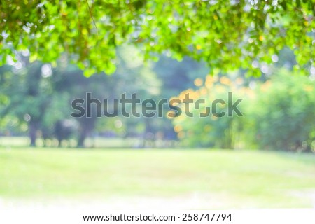 Blurred trees with bokeh in park background, spring summer season - stock photo