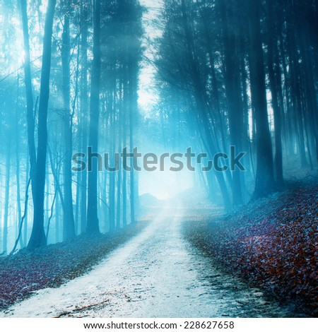Blurry and foggy mystical forest road with soft blue light. - stock photo