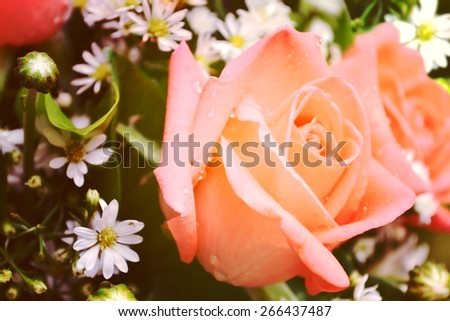 Blurry Beautiful Old Rose Color Nature Flower Vintage Tone - Soft Focus Texture Background