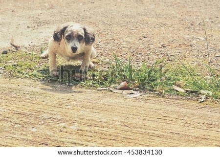Blurry Dog. Filter effect tone. - stock photo