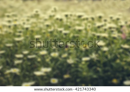 Blurry flowers field
