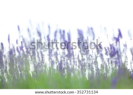 Blurry lavender background