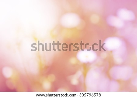 Blurry white daisy flower and grass pink and sweet gradient flowers vintage background - stock photo