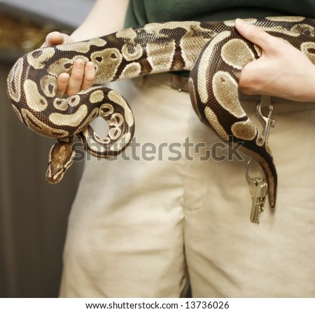 Boa constrictor held by zoo keeper - stock photo