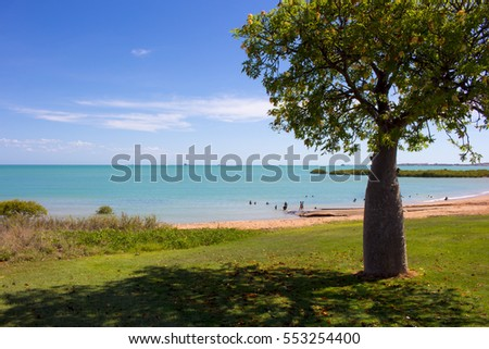 Boab tree Adansonia Gregorii on Town Beach in tourist town of  Broome ,North Western Australia  faces out on to the waters of Roebuck Bay fringed by green mangroves  on a hot humid  day in summer.