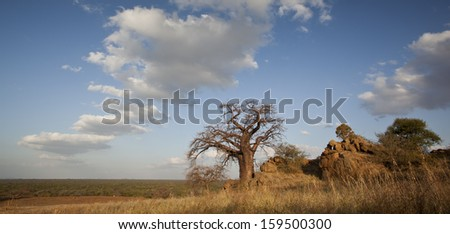 boabab and clouds - stock photo