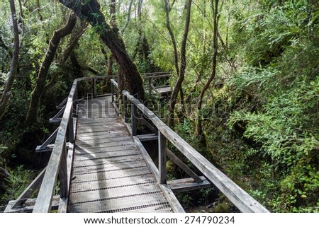 Boardwalk in a forest in National Park Chiloe, Chile - stock photo