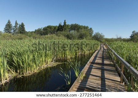 Boardwalk in a Marsh, Riding Mountain National Park, Manitoba, Canada - stock photo