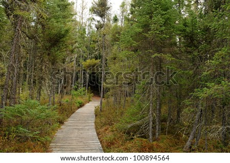Boardwalk in bog ecosystem along Raven Trail in Northern Highland-American Legion State Forest, Wisconsin - stock photo