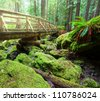 boardwalk in forest - stock photo