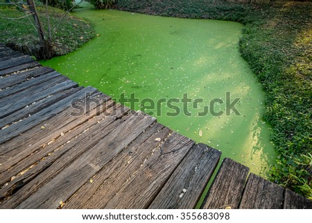 Boardwalk in lush green tropical forest - stock photo