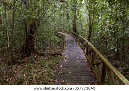 Boardwalk in tropical rainforest, Malaysia - stock photo