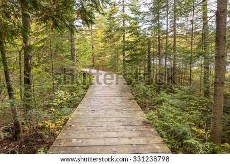Boardwalk Leading Through a Coniferous Forest in Autumn - Algonquin Provincial Park, Ontario, Canada