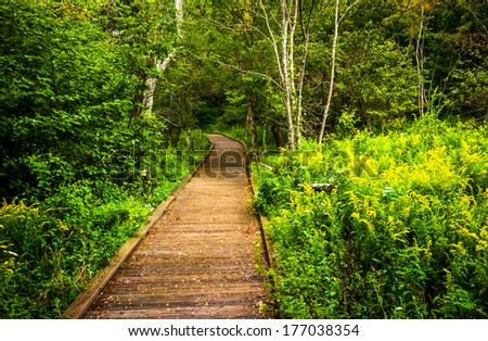 Boardwalk path along the Limberlost Trail in Shenandoah National Park, Virginia. - stock photo