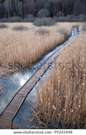 boardwalk path through swamp with reeds in early spring
