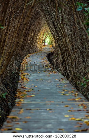 Boardwalk through the mangrove forest - stock photo