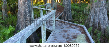 Boardwalk through the thick swamps of central Florida - stock photo