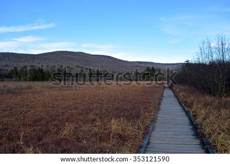 Boardwalk Trail through Cranberry Glades - stock photo