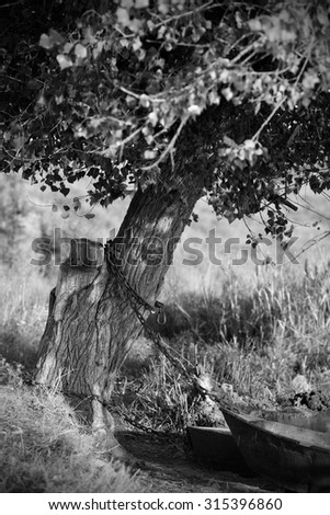 boat tied to a tree in black and white - stock photo