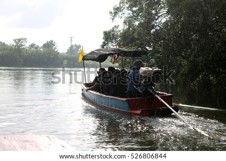 Boat trips run in the rain in the mangrove forest.