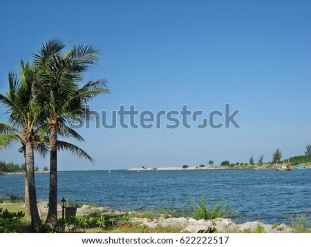 Boats at the pier and coconut tree with beautiful blue sky.