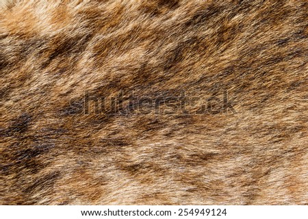 bobcat fur background texture image - stock photo