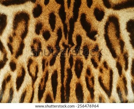 bobcat fur details - stock photo