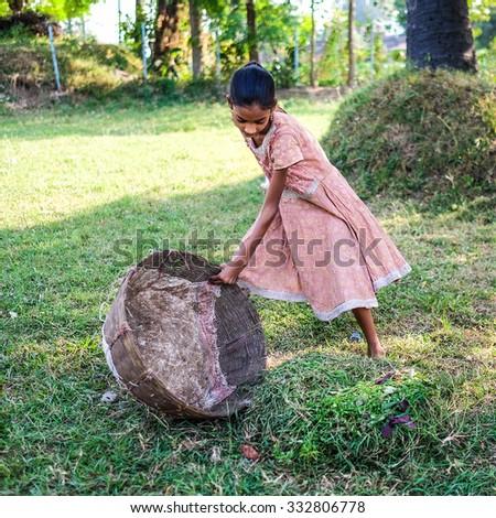 Bodh gaya, Bihar, India . 20 Oct 2015.  A girl weeding the grasses.  - stock photo
