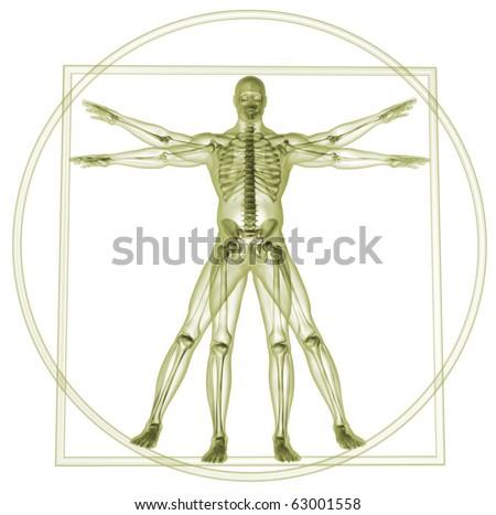 Body and skeleton in vitruvian man  - 3d render - stock photo