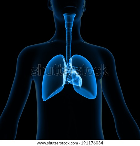 Body with Lungs - stock photo