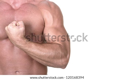 bodybuilder torso on white background - stock photo