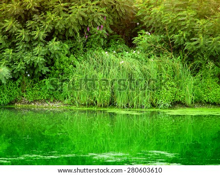 bog - stock photo