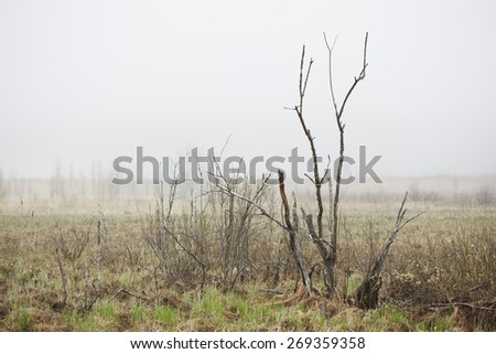 Bog landscape with fog - stock photo