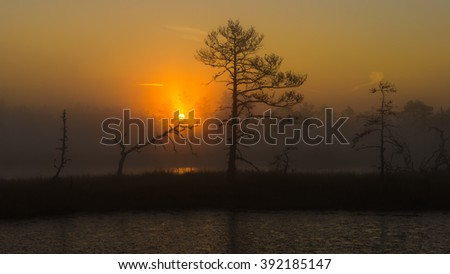 Bog landscape with rising sun.