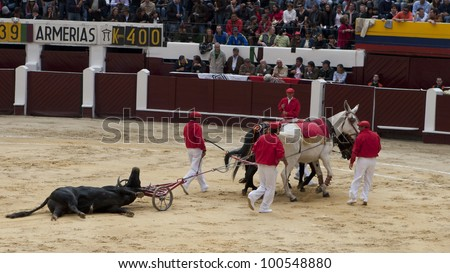 BOGOTA - JANUARY 18: A bull was killed by a bullfighter in the Plaza de Toros on January 18, 2009 in Bogota, Colombia.The popular bullfighting competition is held annually in Plaza de Toros. - stock photo