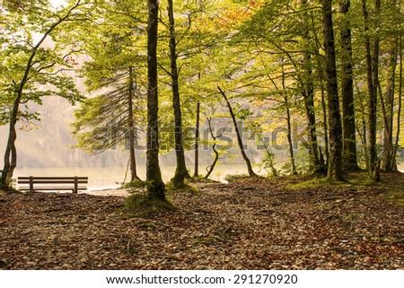 Bohinj lake in Slovenia -  trees on the lake bank, autumn landscape  - stock photo